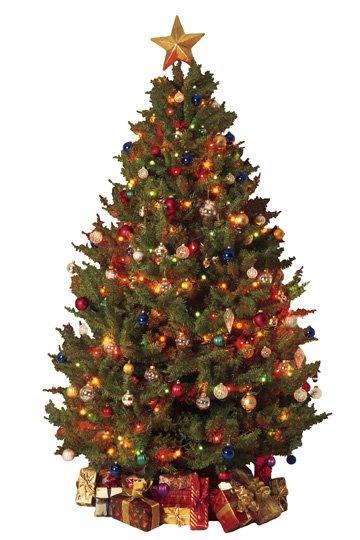 tree.jpg.jpe