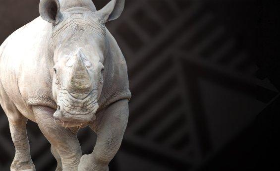 kczoo_rhino.png