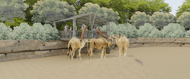 Camel Feeding.png