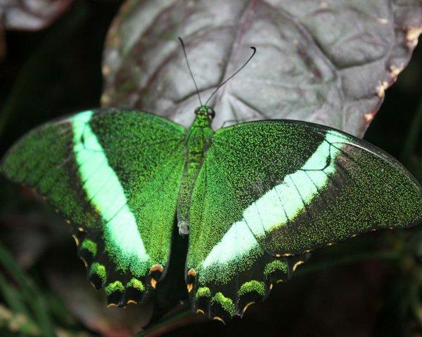 Emerald-760x608.jpg.jpe