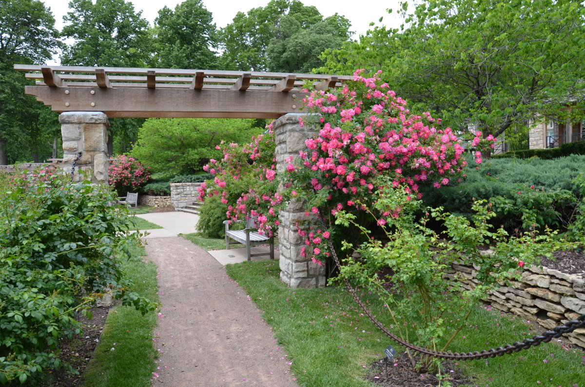 Roses In Garden: Laura Conyers Smith Municipal Rose Garden In Loose Park