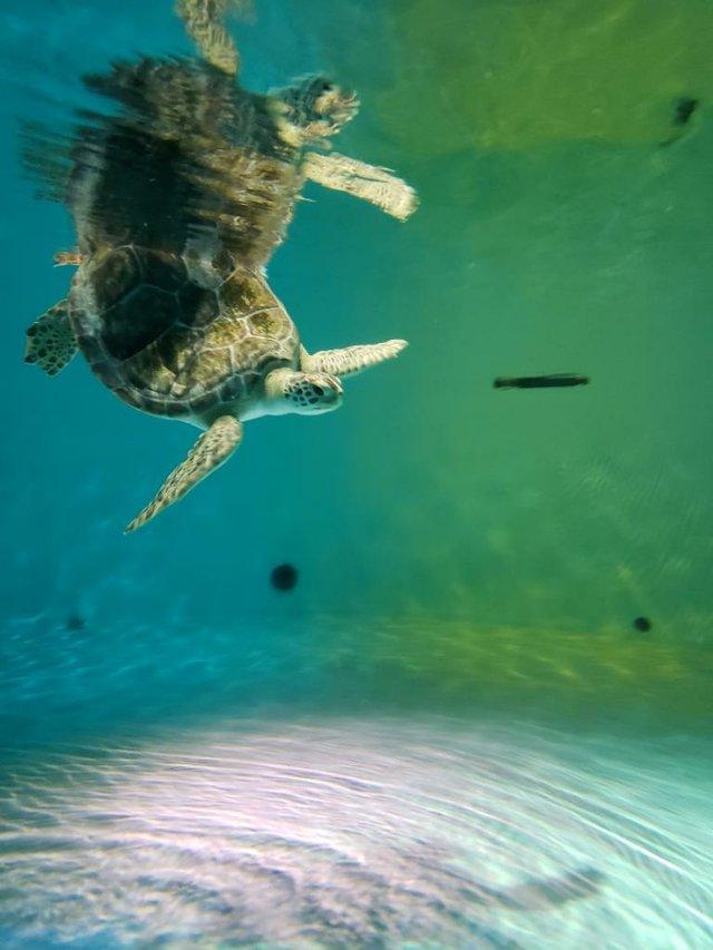 SeaLifeTurtle2.jpg.jpe