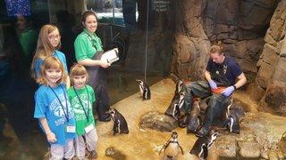 penguinfeeding.jpg.jpe