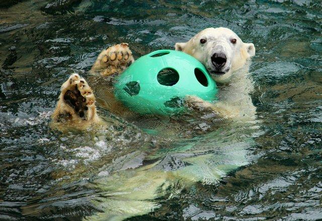 KCZooBerlinSwimmingwithball.jpe