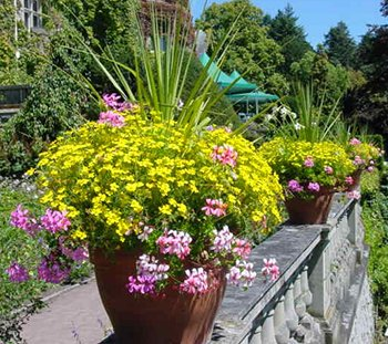 imagesevents27343yellow-and-pink-flowers-jpg.jpe