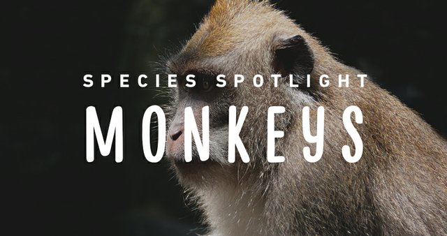 imagesevents27517speciesspotlight-monkeys-thumb-jpg.jpe