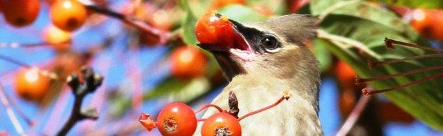 imagesevents28188Urban-Bird-e1518708862105-jpg.jpe