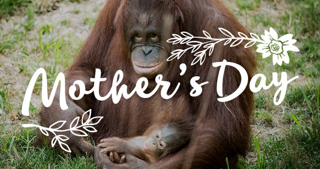 imagesevents28192mothersday-thumb-jpg.jpe