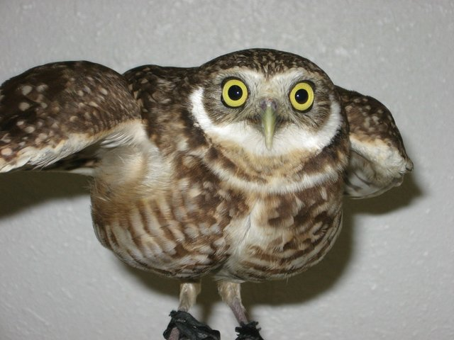 imagesevents28712operation-wildlife-night-shift-JPG.jpe