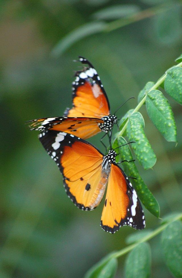 imagesevents28896butterflies-jpg.jpe