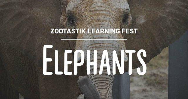 imagesevents29284zootastik-elephants-thumb-jpg.jpe