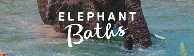 imagesevents29285elephantbaths-eventbanner-jpg.jpe