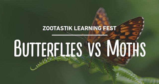 imagesevents29577zootastik-butterflysvsmoths-thumb-jpg.jpe