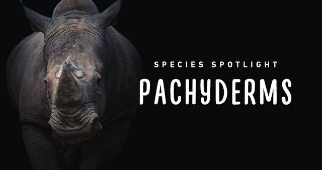 imagesevents29580SpeciesSpotlight-pachyderms-Thumb-jpg.jpe