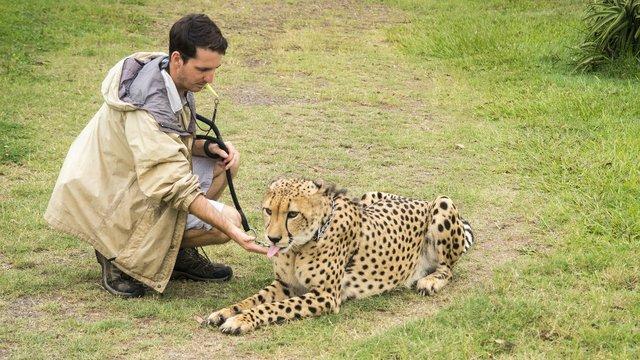imagesevents30675wild-animal-pet-jpg.jpe