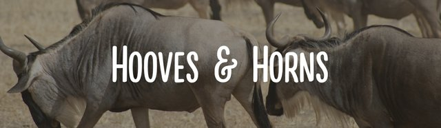 imagesevents32167hooves-and-horns-event-banner-jpg.jpe