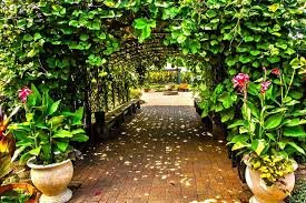 beanstalk_childrens_garden_kc.jpg