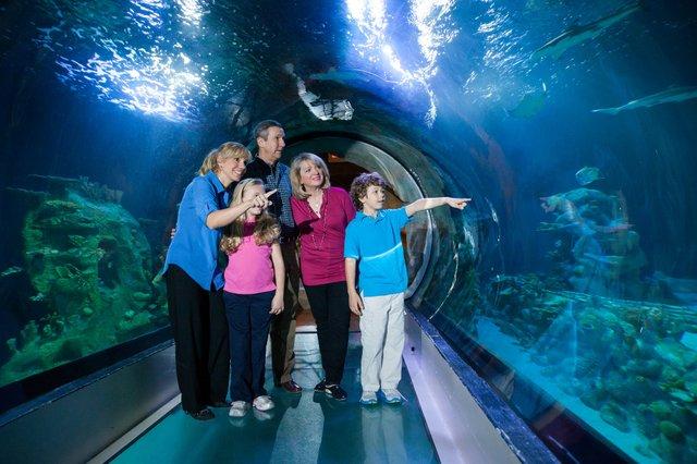 Family in Ocean Tunnel.jpg