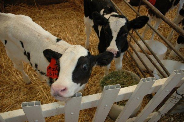 Shatto Dairy Farm Kc Parent Magazine