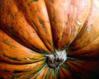 fall_fling_2.jpg