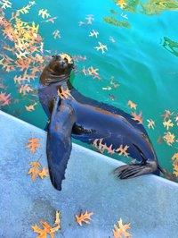sea-lion-darcy-richardson2.jpg