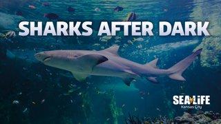 sharks_after_dark.jpg