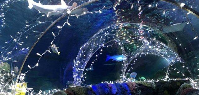 sea_of_lights.jpg