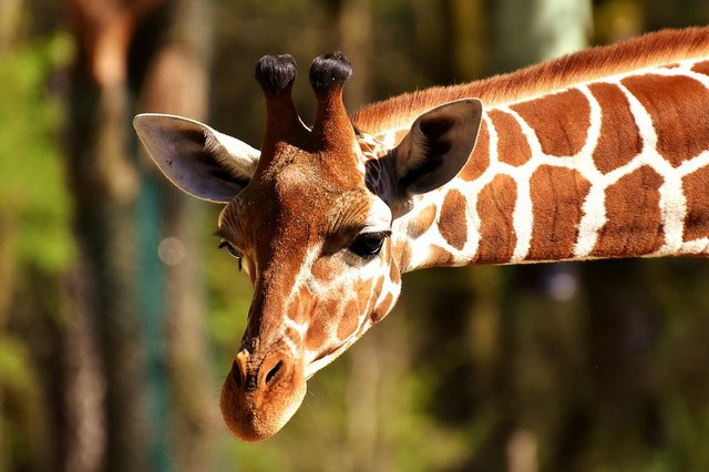 Zoo to You.jpg