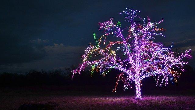 lees_summit_magic_tree.jpg