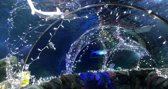 Sea of Lights.jpg