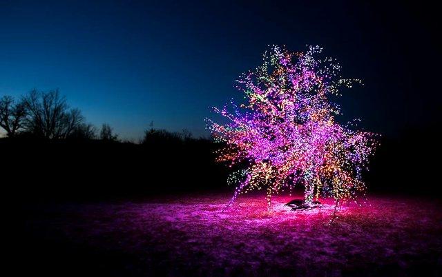 leessummitmagictree.jpg