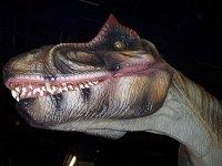 dinosaursunearthed.jpg.jpe
