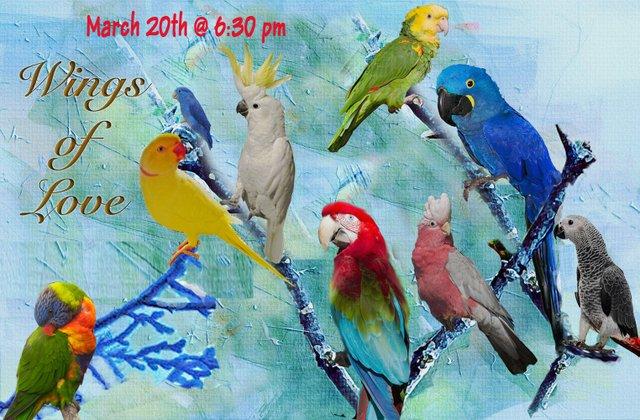 For the Love of Birds Flyer.jpg