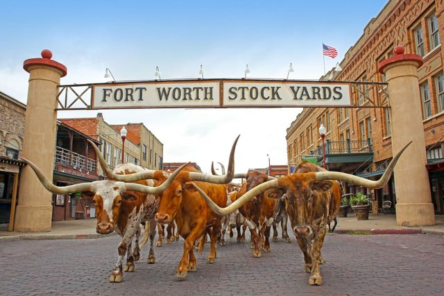 fort_worth_stockyards_herd.jpeg