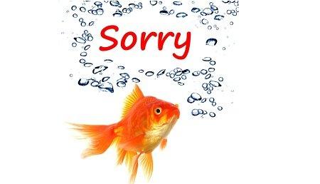 apology.jpg.jpe