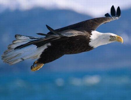eagle.jpg.jpe