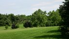Loose Park 3.jpg