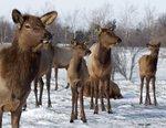 Native Hoofed Animal Enclosure at Fleming Park.jpeg