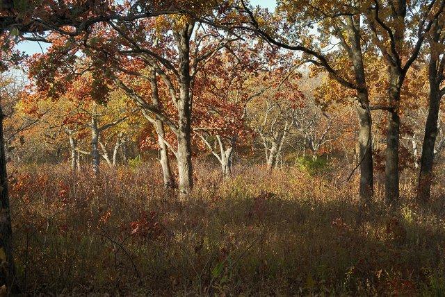 Burr Oak Woods 2.jpg