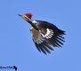 Burroughs Audubon Nature Center and Bird Sanctuary 5.jpg