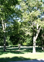 Woods Chapel Park.jpeg