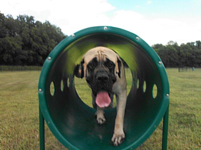 Tails & Trails Dog Park 2.jpg
