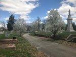 Elmwood Cemetery.jpg