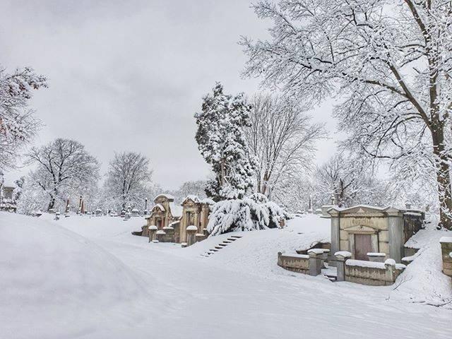 Elmwood Cemetery 3.jpg