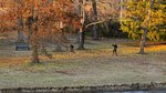 Chaumiere Woods Park 2.jpeg
