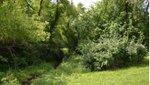 Ingels Park.jpg