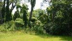 Rock Creek Park.jpg
