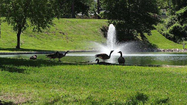 Spring Valley Park 3.jpg