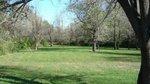 White Oak Park.jpg