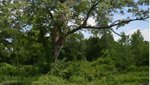 Woodbrooke Park.jpg